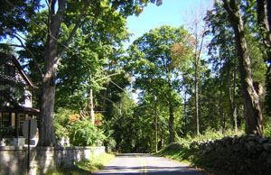 The view of trees and the road on Turk Hill
